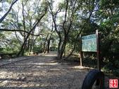 羊稠坑森林步道:羊稠坑森林步道 (11).jpg