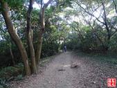 羊稠坑森林步道:羊稠坑森林步道 (13).jpg