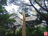 羊稠坑森林步道:羊稠坑森林步道 (14).jpg