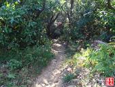羊稠坑森林步道:羊稠坑森林步道 (18).jpg