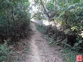 羊稠坑森林步道:羊稠坑森林步道 (15).jpg