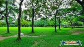 大安森林公園~黃金雨:大安森林公園~黃金雨 (8).jpg