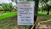 大安森林公園~黃金雨:大安森林公園~黃金雨 (16).jpg