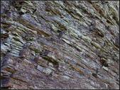 太平山山毛櫸鐵杉林:太平山山毛櫸鐵杉林 (14).jpg