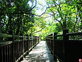 仙跡岩親山步道:仙跡岩步道 (20).jpg