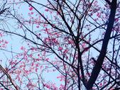 紅淡山蝙蝠洞:紅淡山 (63).jpg