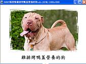我的相簿:50807楊智惟雞排烤鴨蓋營養的狗.gif